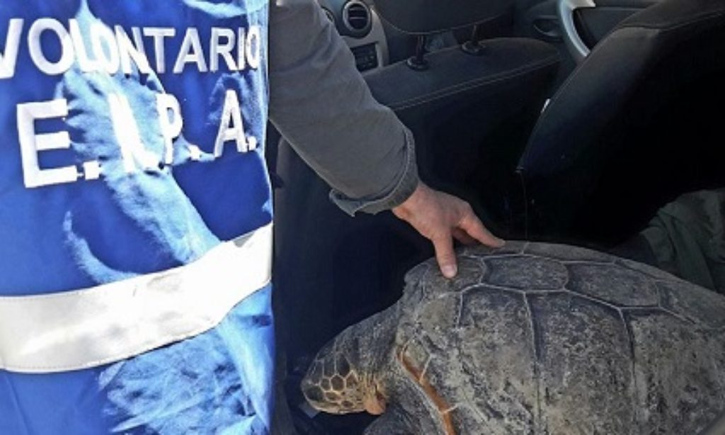 "Cilento: al via la ""Campagna Jairo-Mediterraneo in difesa delle tartarughe"