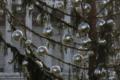 """Indagato Spelacchio, l'albero di Natale romano """"sobrio ed elegante"""" da 48mila euro"""