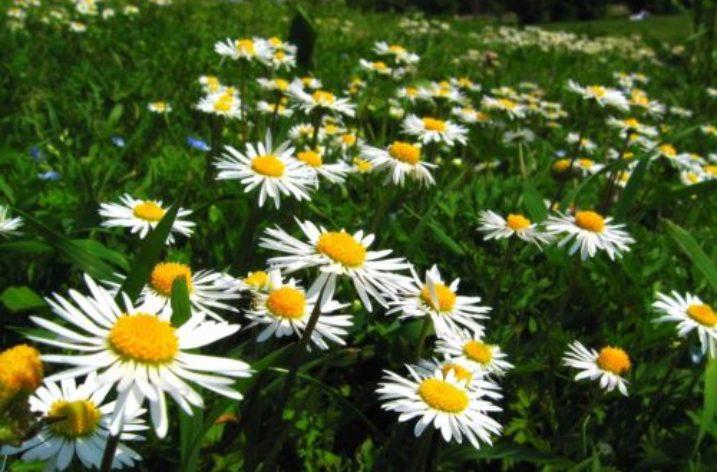 E' Primavera: il Tripudio della Natura nell'Arte
