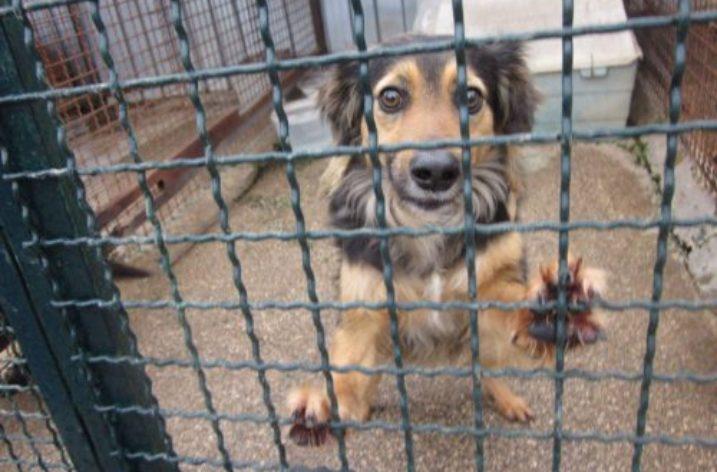 """Al Canile di Giugliano """"Crocchetta day"""": centinaia di cani rischiano di morire di fame"""