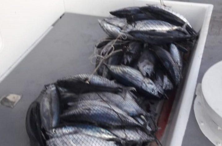 Guardia Costiera di Salerno: Sequestrati oltre 120 Kg di Tonno rosso