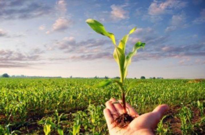 Finanziamenti agevolati per le start up agricole campane