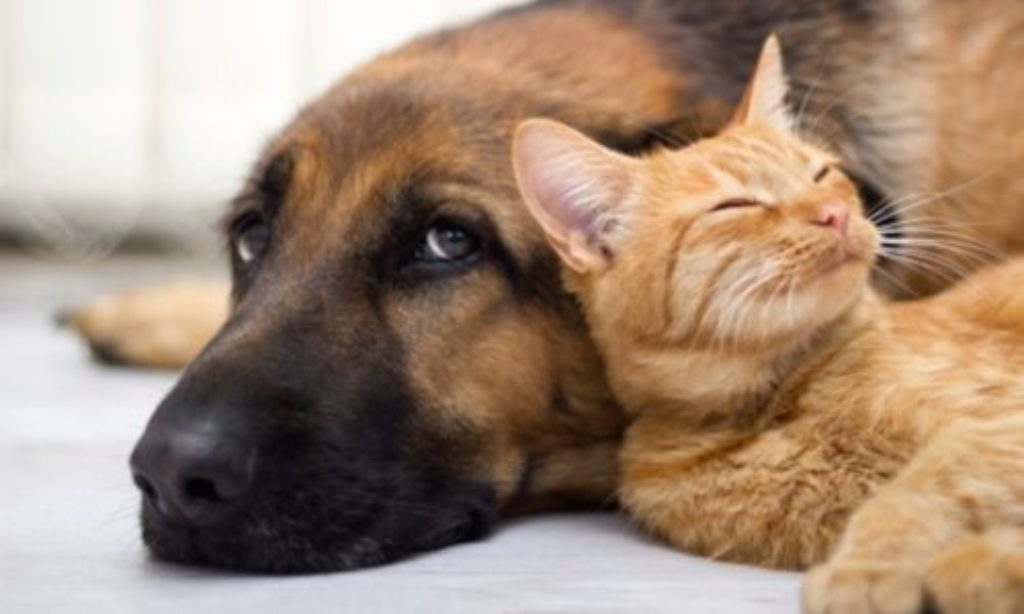 Regione Campania, approvata la legge per la tutela del benessere degli animali.
