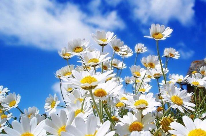 La Primavera arriva oggi 20 Marzo!