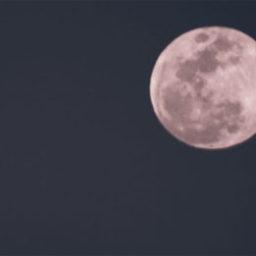 Ieri  ed a Pasquetta in cielo la Luna Rosa che rosa non è