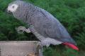 Scafati: detenzione illecita di specie selvatiche tutelate