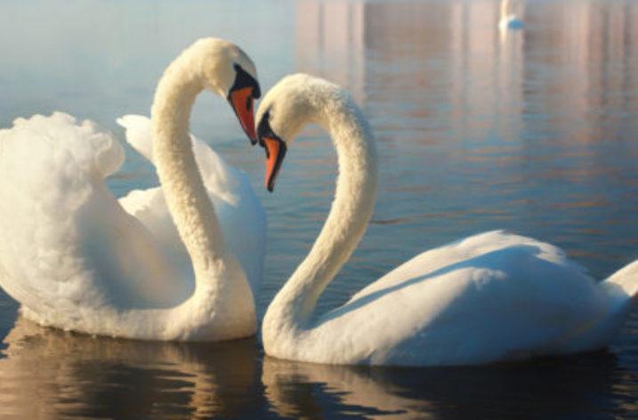 Racchiusi in un lago l'amore della Natura e la malvagità dell'uomo