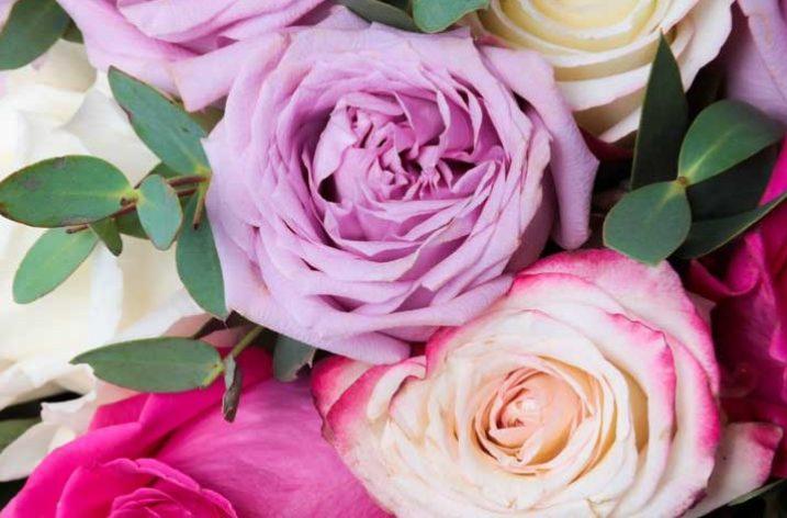 Un maggio di rose, a ciascuna il suo colore!