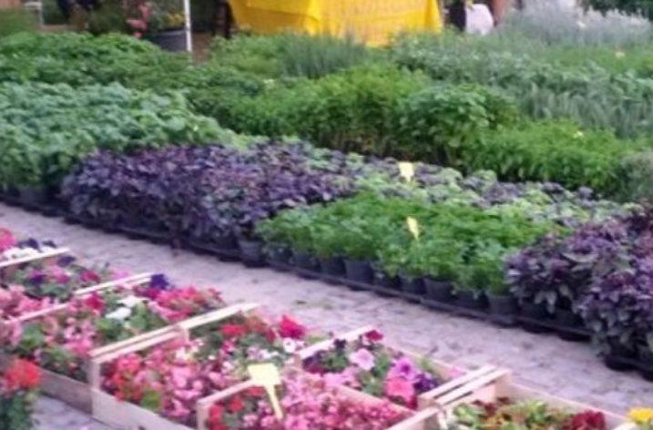 Torna Salerno in Flora