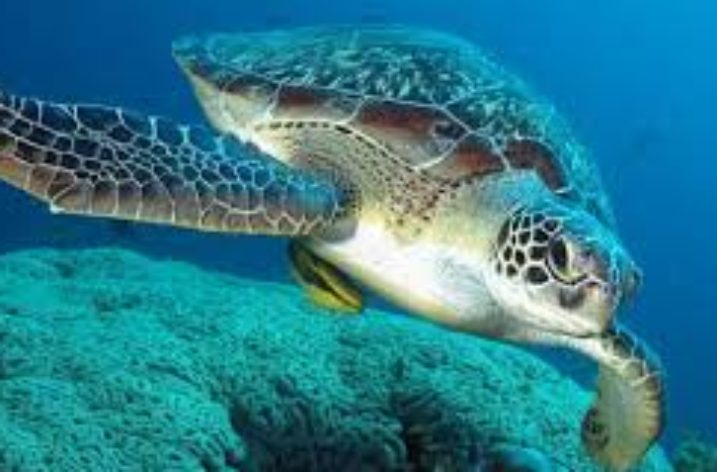 Giornata Mondiale delle Tartarughe: apre a Pioppi il Marine Turtle Center