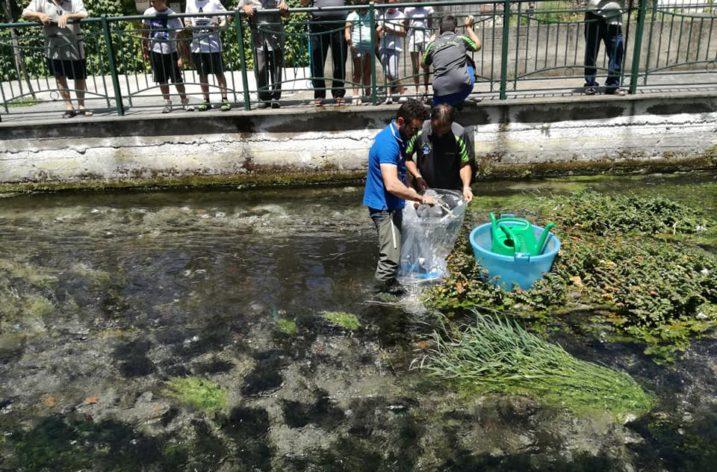 Migliaia di piccole trote immesse nei fiumi della Campania